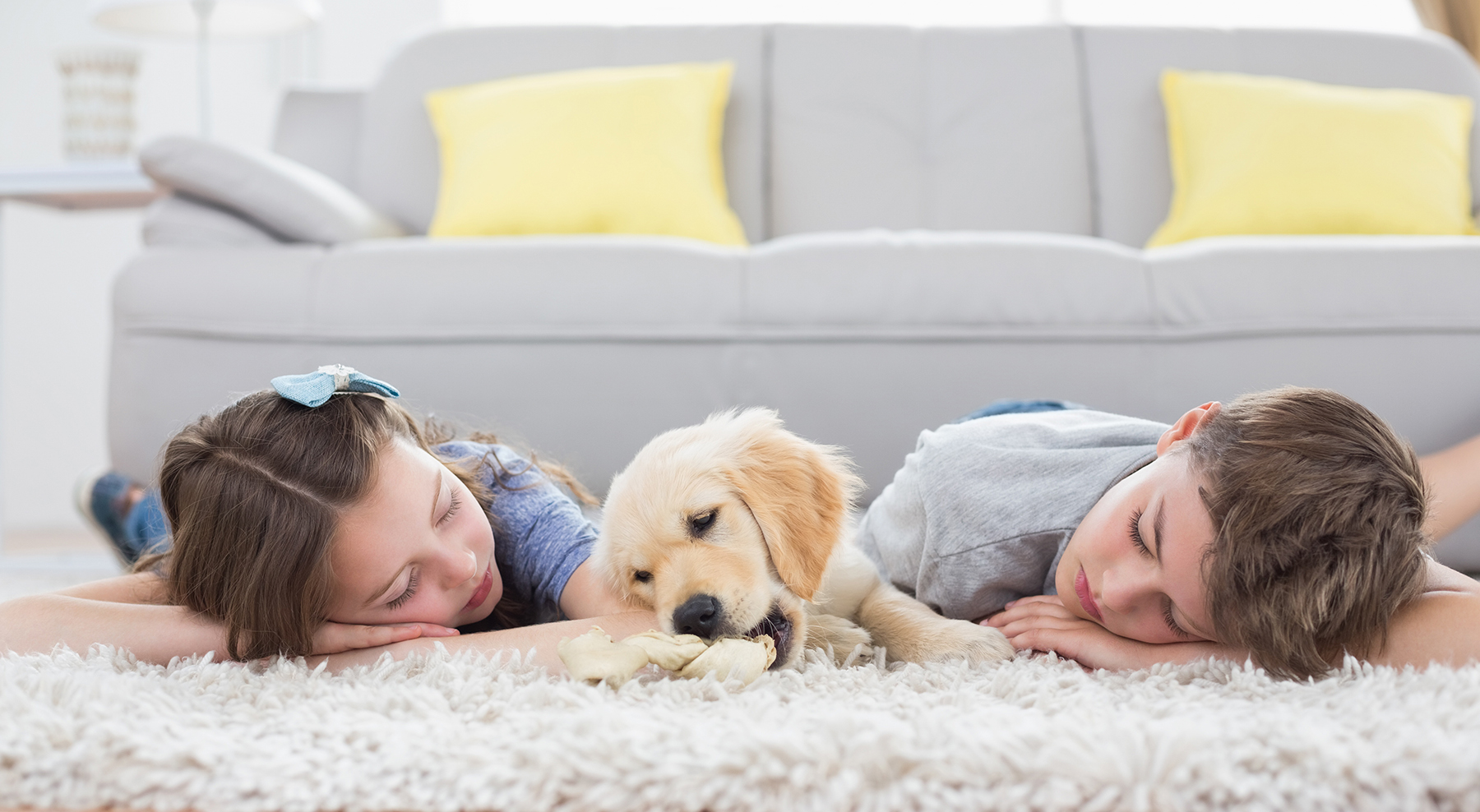 Pet Or Odor Removal